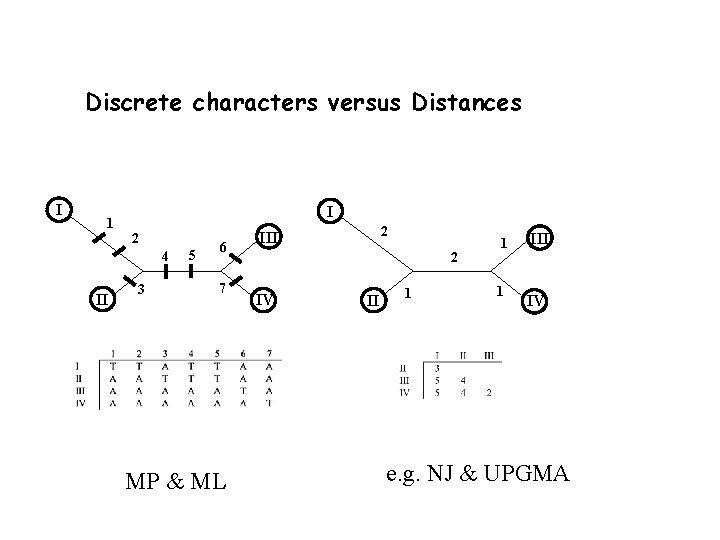 Discrete characters versus Distances I 1 I 2 4 II 3 5 6 7