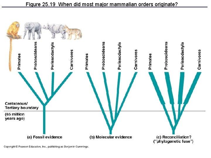 Figure 25. 19 When did most major mammalian orders originate?