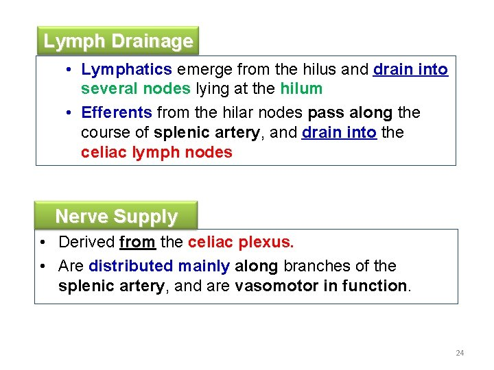 Lymph Drainage • Lymphatics emerge from the hilus and drain into several nodes lying