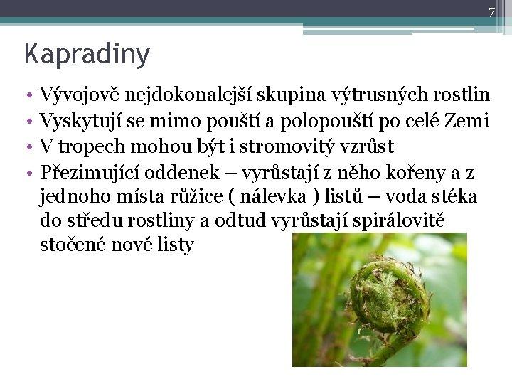 7 Kapradiny • • Vývojově nejdokonalejší skupina výtrusných rostlin Vyskytují se mimo pouští a