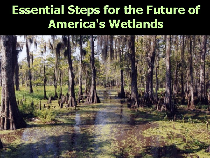 Essential Steps for the Future of America's Wetlands As citizens committed to maintaining and