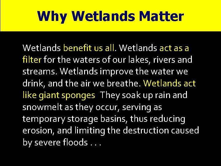 Why Wetlands Matter Wetlands benefit us all. Wetlands act as a filter for the