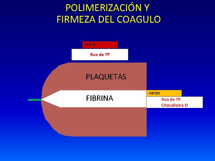 POLIMERIZACIÓN Y FIRMEZA DEL COAGULO EXTEM Rvo de TP PLAQUETAS FIBRINA