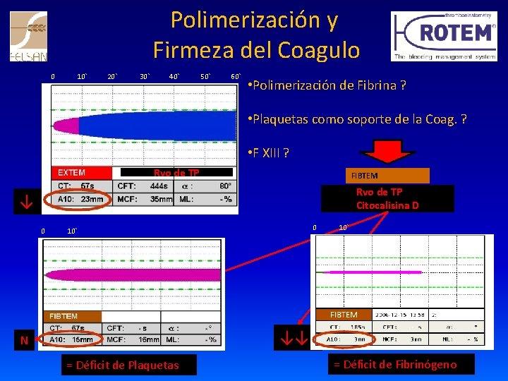 Polimerización y Firmeza del Coagulo 0 10` 20` 30` 40` 50` 60` • Polimerización