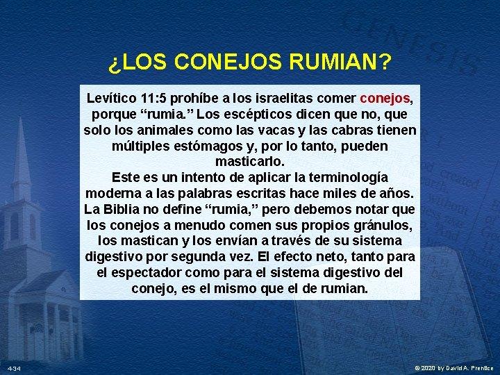 """¿LOS CONEJOS RUMIAN? Levítico 11: 5 prohíbe a los israelitas comer conejos, porque """"rumia."""