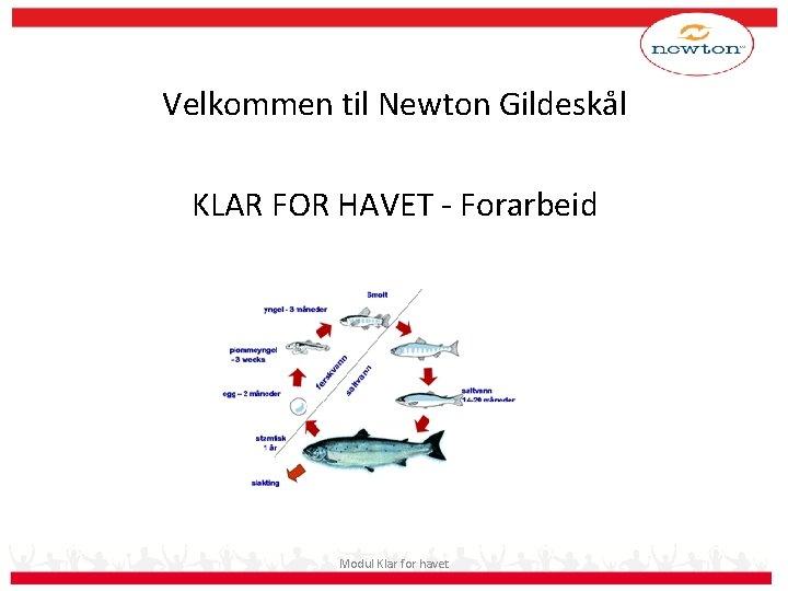 Velkommen til Newton Gildeskål KLAR FOR HAVET - Forarbeid Modul Klar for havet