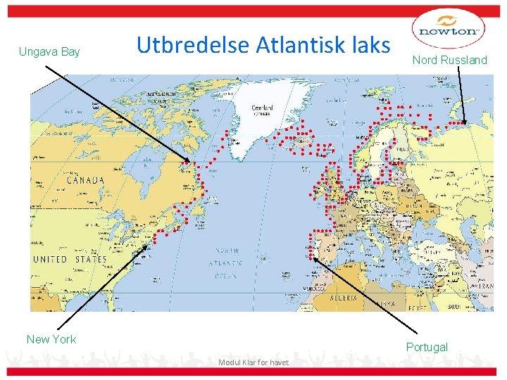 Ungava Bay Utbredelse Atlantisk laks New York Nord Russland Portugal Modul Klar for havet
