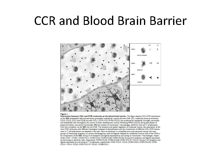 CCR and Blood Brain Barrier