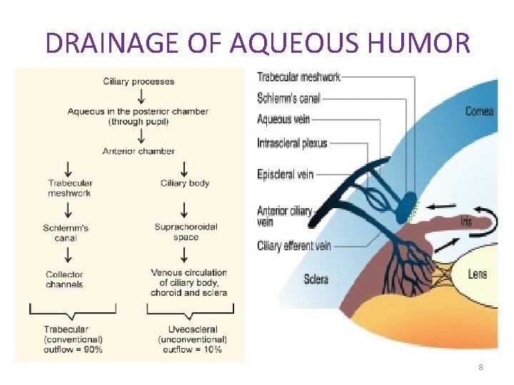 DRAINAGE OF AQUEOUS HUMOR 8
