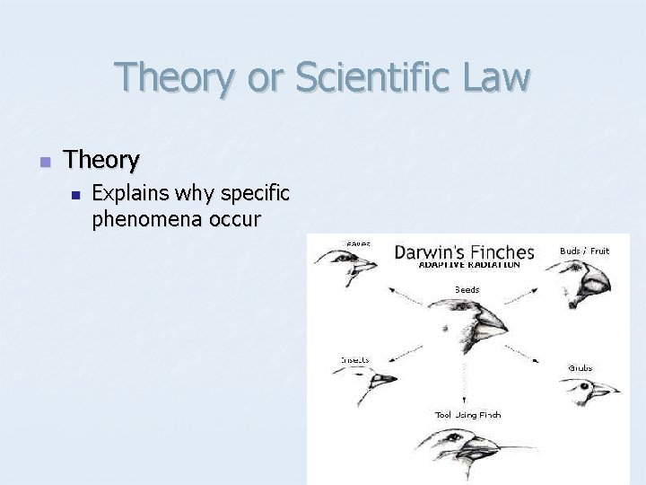 Theory or Scientific Law n Theory n Explains why specific phenomena occur