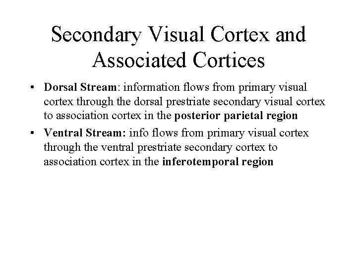 Secondary Visual Cortex and Associated Cortices • Dorsal Stream: information flows from primary visual