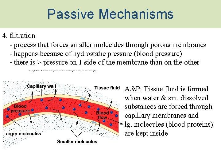 Passive Mechanisms 4. filtration - process that forces smaller molecules through porous membranes -