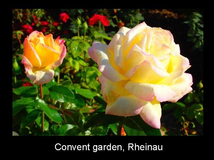 Convent garden, Rheinau