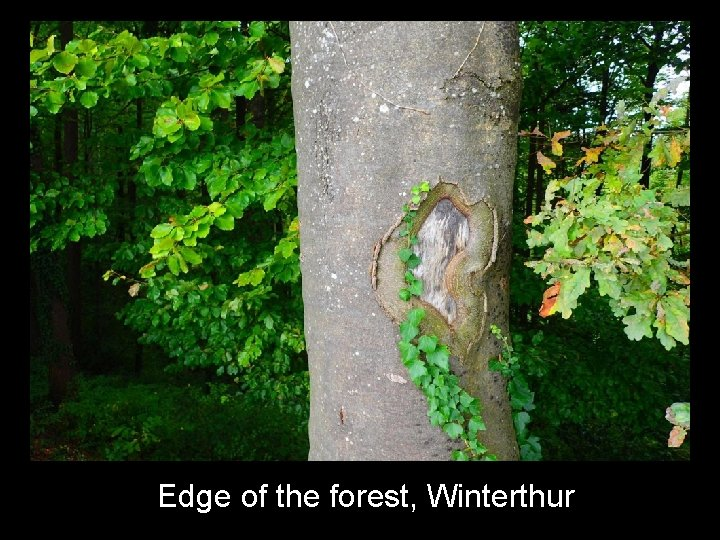 Edge of the forest, Winterthur