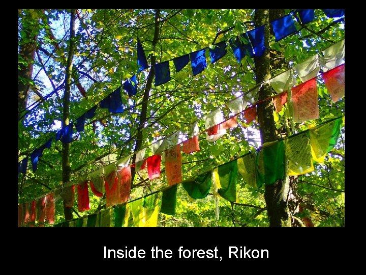 Inside the forest, Rikon