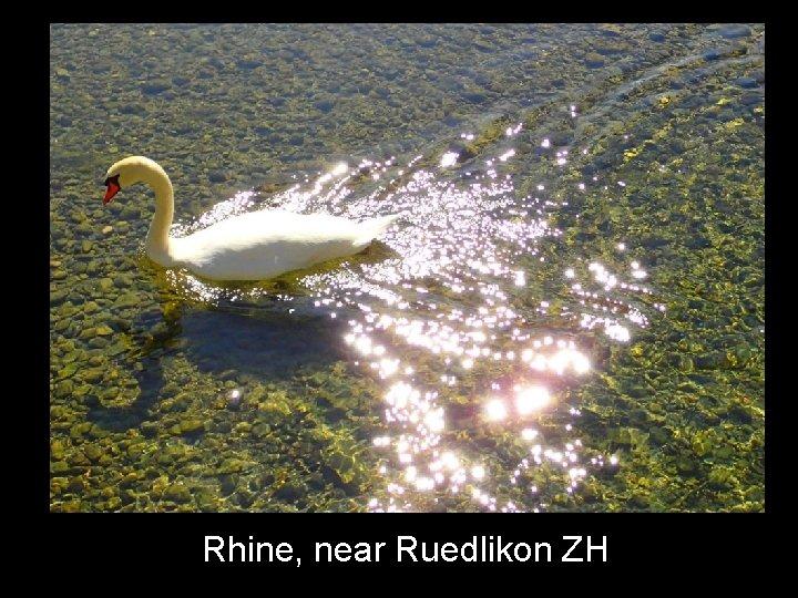 Rhine, near Ruedlikon ZH