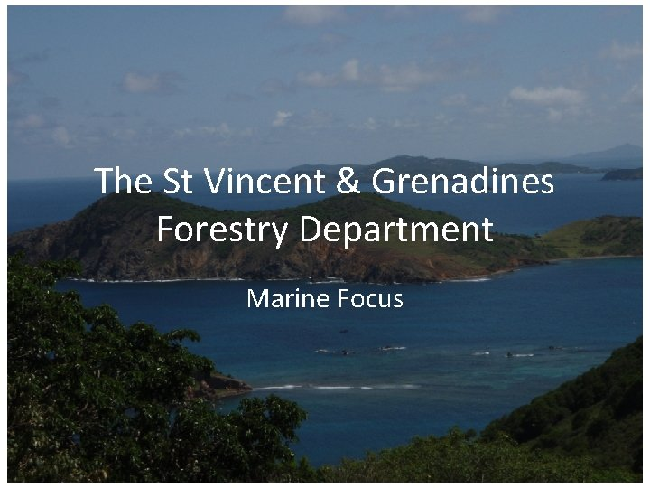 The St Vincent & Grenadines Forestry Department Marine Focus