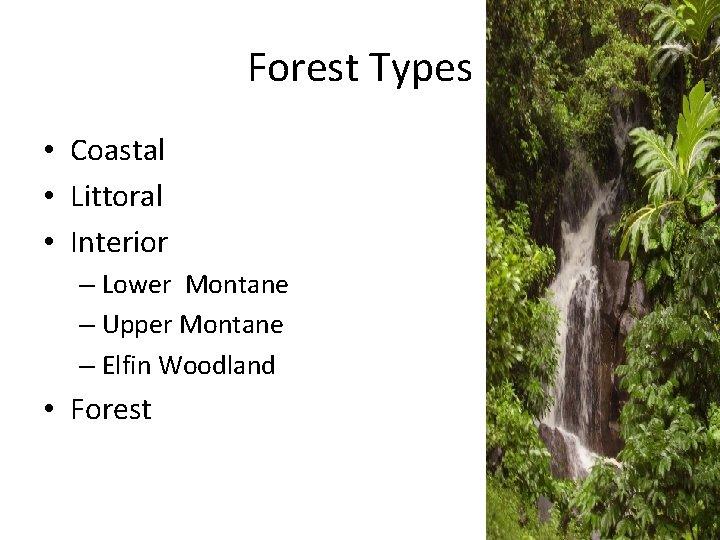 Forest Types • Coastal • Littoral • Interior – Lower Montane – Upper Montane