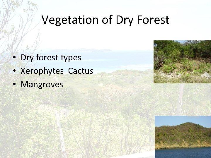 Vegetation of Dry Forest • Dry forest types • Xerophytes Cactus • Mangroves
