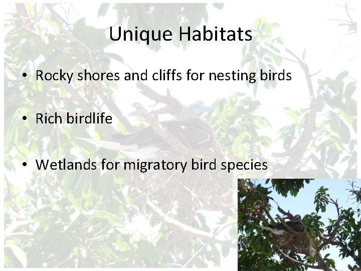 Unique Habitats • Rocky shores and cliffs for nesting birds • Rich birdlife •