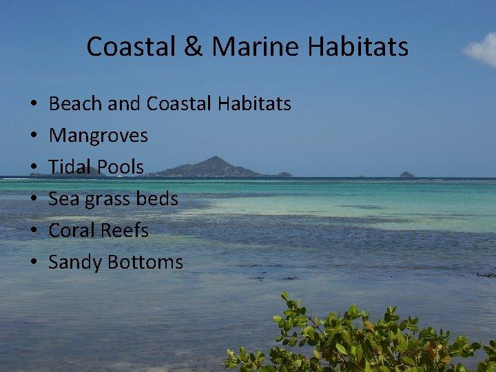 Coastal & Marine Habitats • • • Beach and Coastal Habitats Mangroves Tidal Pools