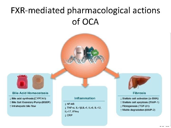 FXR-mediated pharmacological actions of OCA