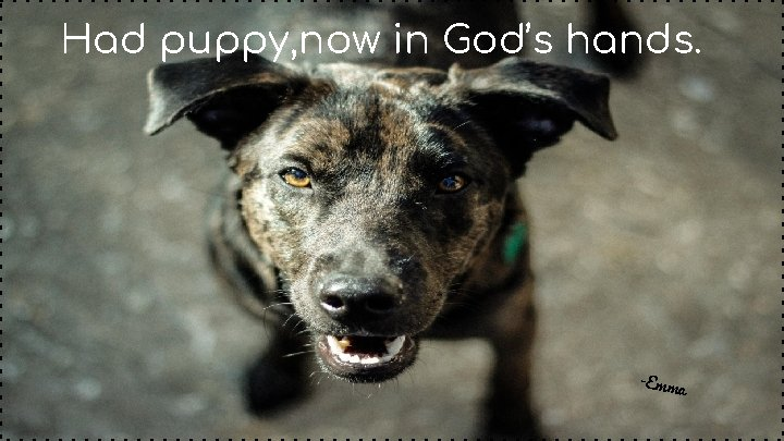Had puppy, now in God's hands. -Emm a