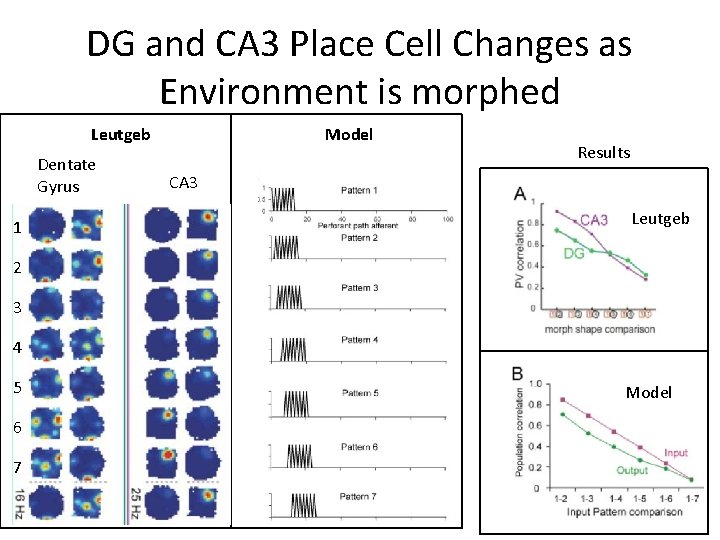DG and CA 3 Place Cell Changes as Environment is morphed Leutgeb Dentate Gyrus