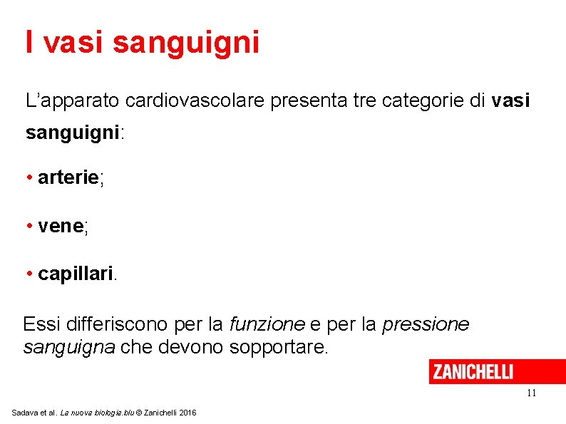 I vasi sanguigni L'apparato cardiovascolare presenta tre categorie di vasi sanguigni: • arterie; •