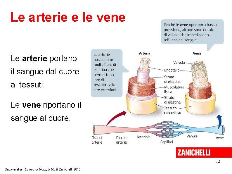 Le arterie e le vene Le arterie portano il sangue dal cuore ai tessuti.