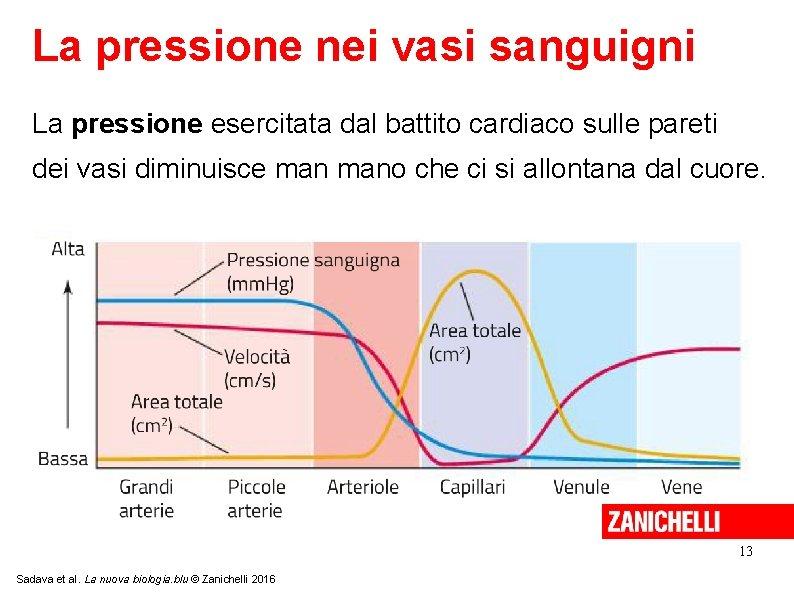 La pressione nei vasi sanguigni La pressione esercitata dal battito cardiaco sulle pareti dei