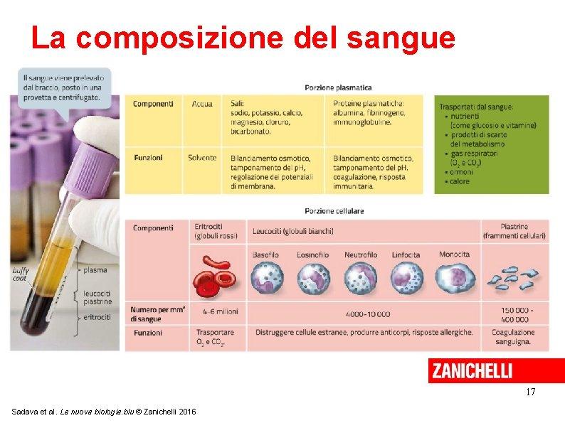La composizione del sangue 17 Sadava et al. La nuova biologia. blu © Zanichelli