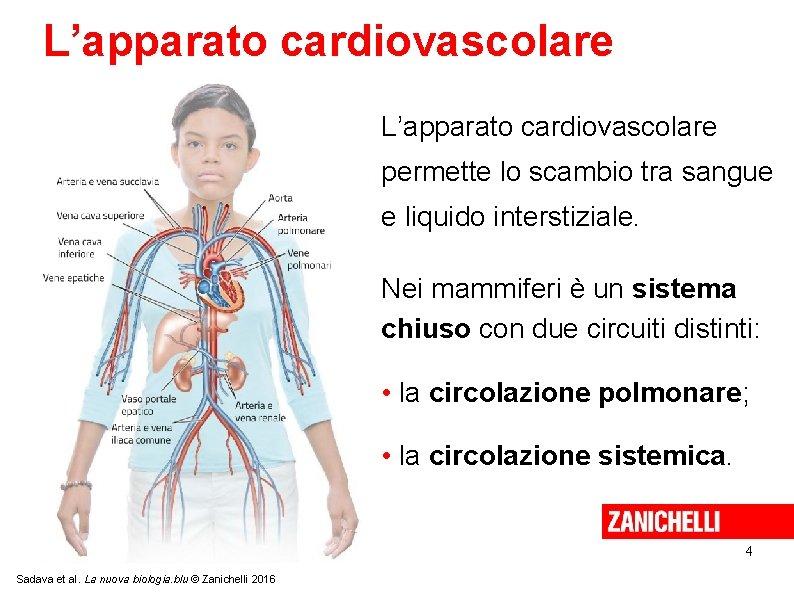 L'apparato cardiovascolare permette lo scambio tra sangue e liquido interstiziale. Nei mammiferi è un
