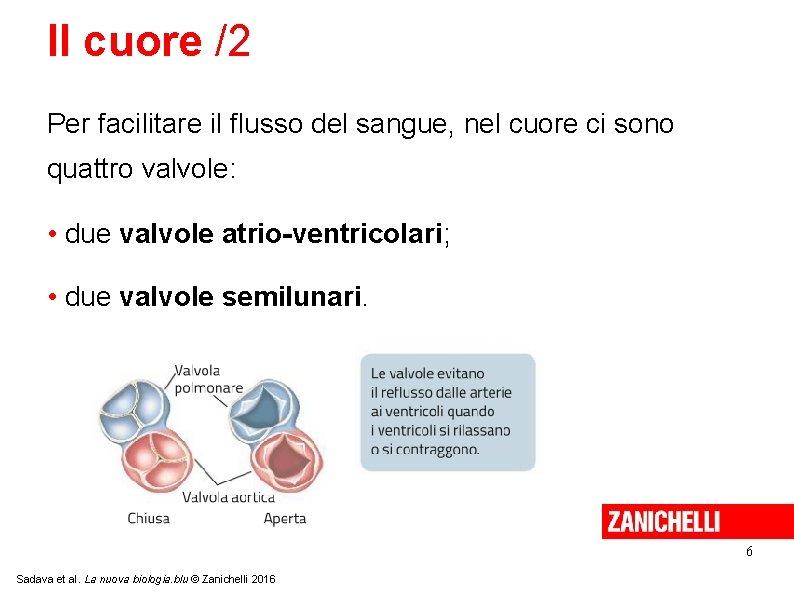 Il cuore /2 Per facilitare il flusso del sangue, nel cuore ci sono quattro