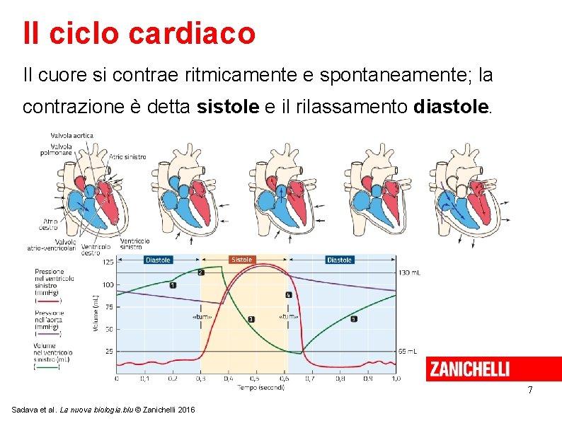 Il ciclo cardiaco Il cuore si contrae ritmicamente e spontaneamente; la contrazione è detta