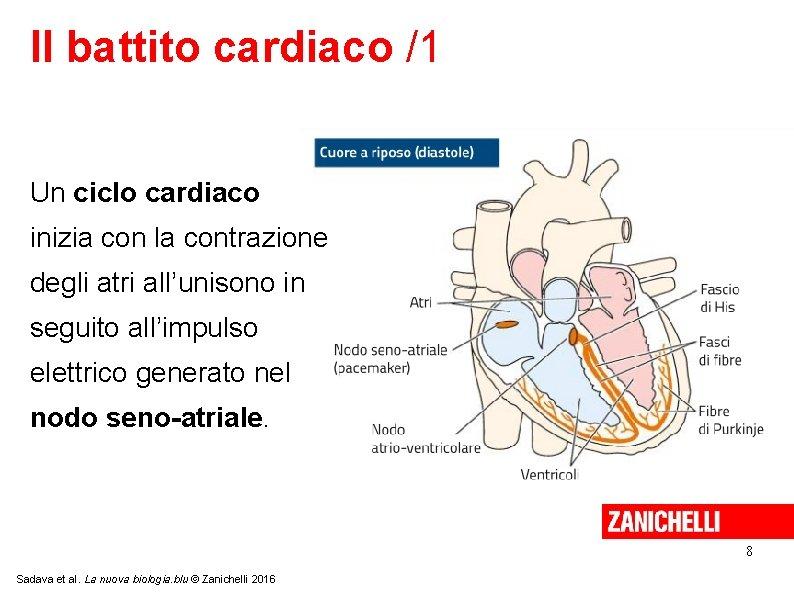 Il battito cardiaco /1 Un ciclo cardiaco inizia con la contrazione degli atri all'unisono