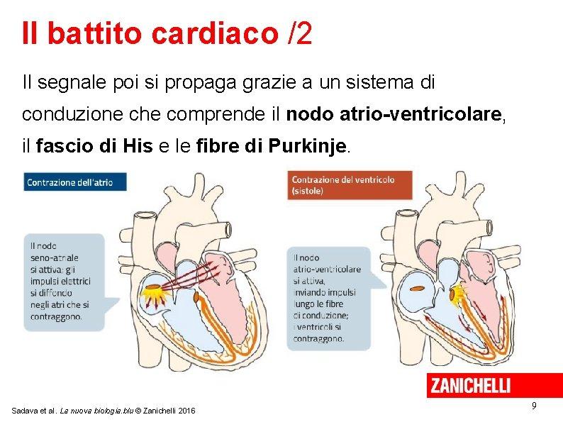 Il battito cardiaco /2 Il segnale poi si propaga grazie a un sistema di