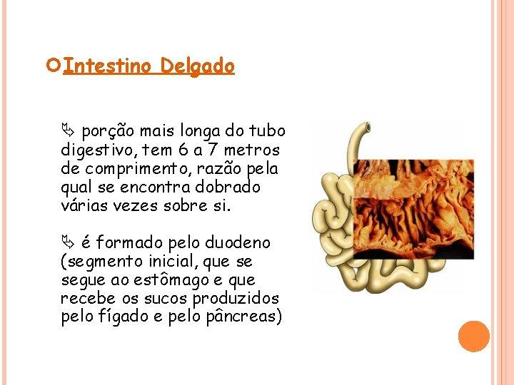 Intestino Delgado porção mais longa do tubo digestivo, tem 6 a 7 metros