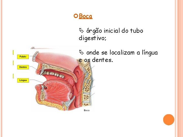 Boca órgão inicial do tubo digestivo; onde se localizam a língua e os