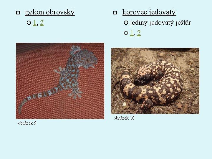 gekon obrovský 1, 2 korovec jedovatý jediný 1, obrázek 9 obrázek 10 2