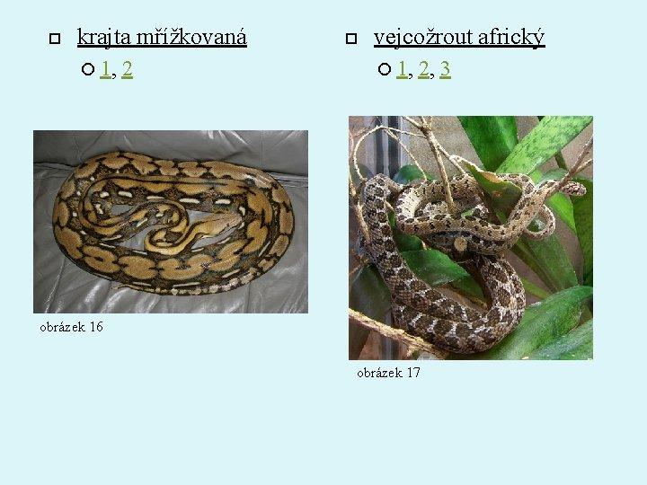 krajta mřížkovaná 1, 2 vejcožrout africký 1, 2, 3 obrázek 16 obrázek 17