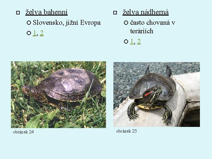 želva bahenní Slovensko, 1, obrázek 24 2 jižní Evropa želva nádherná často chovaná