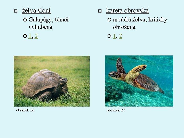želva sloní Galapágy, vyhubená 1, 2 obrázek 26 téměř kareta obrovská mořská želva,