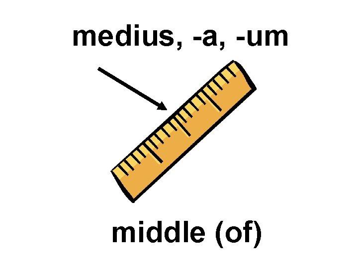 medius, -a, -um middle (of)