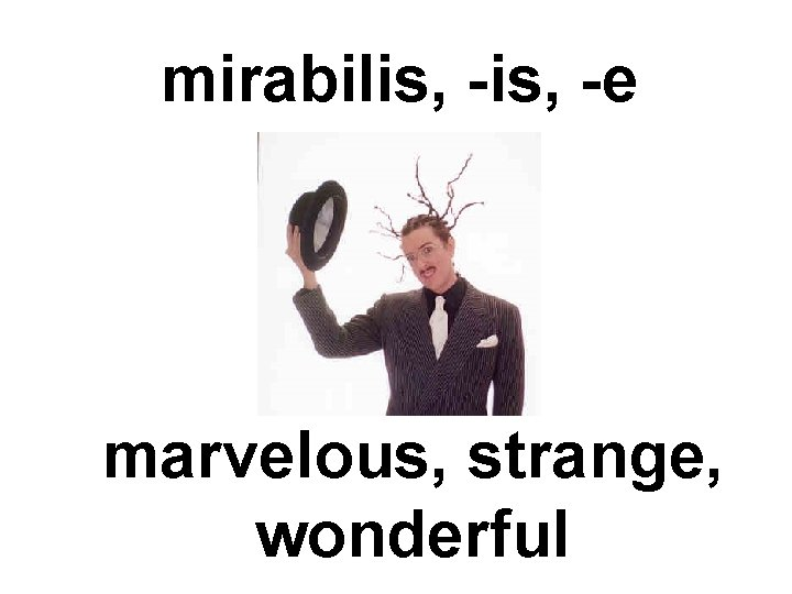 mirabilis, -e marvelous, strange, wonderful
