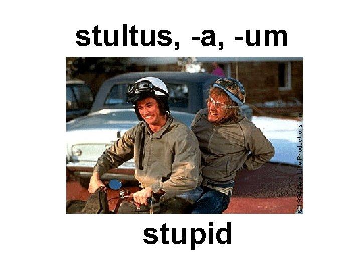 stultus, -a, -um stupid