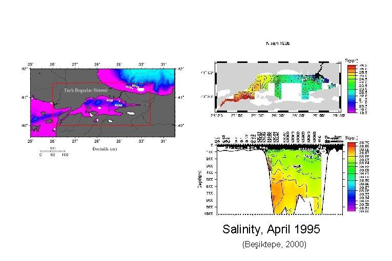 Salinity, April 1995 (Beşiktepe, 2000)