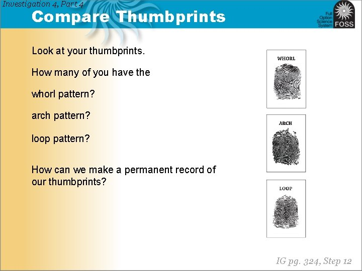 Investigation 4, Part 4 Compare Thumbprints Look at your thumbprints. How many of you