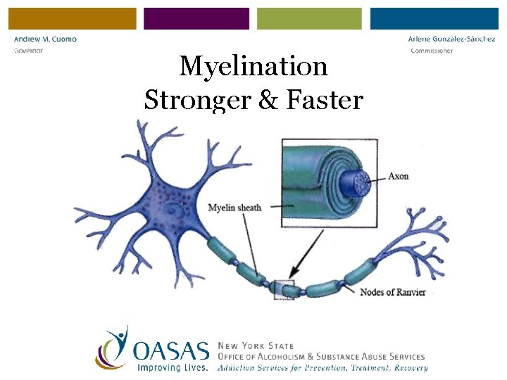 Myelination Stronger & Faster