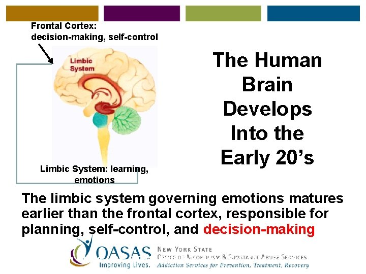 Frontal Cortex: decision-making, self-control Limbic System: learning, emotions The Human Brain Develops Into the
